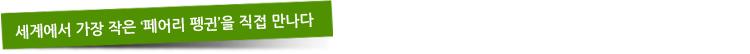 세계에서 가장 작은 '페어리 펭귄'을 직접 만나다